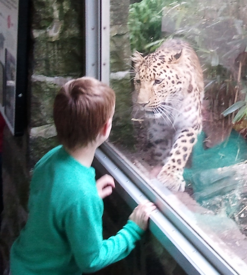 Little kid and animal encounter in Edinburgh Zoo in June 2011. Perfect timing of my friend Roel, who took the picture